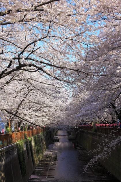 中目黒 桜まつり