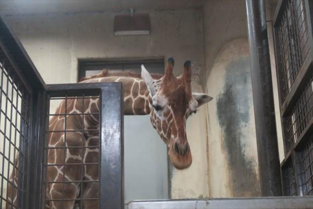 上野動物園「真夏の夜の動物園」